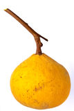 Santol, tropical fruit Stock Image