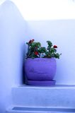 Santorin. Flowewrs in a corner Royalty Free Stock Images