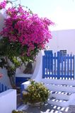 Santorin. Flowers and a fence Stock Images