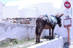 Santorin. One lonesome donkey Stock Photography