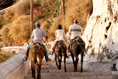 Santorini åsnor Grekland Arkivbilder