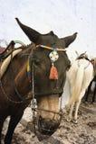 santorini ослов стоковые фотографии rf