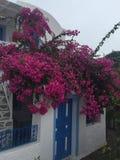 Santorini цветет романтичный остров Греция Стоковые Фотографии RF