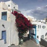 Santorini цветет романтичный остров Греция Стоковое Изображение RF
