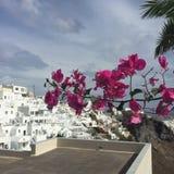 Santorini цветет романтичный остров Греция Стоковая Фотография RF