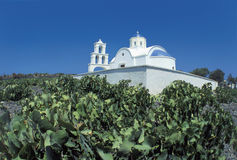 Santorini. Vineyard, santorini island, cyclades, greece stock images