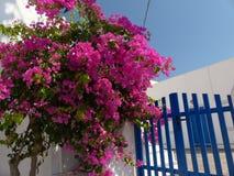 Santorini Lizenzfreie Stockfotos