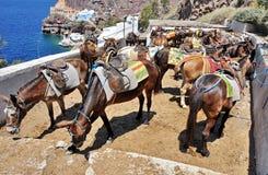 Γάιδαρος Santorini Στοκ Εικόνες