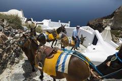 Santorini驴 库存图片
