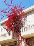 豪华旅馆大厦阳台和大阳台santorini希腊 库存照片