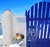 Santorini architecture with cat in Greece Royalty Free Stock Photo