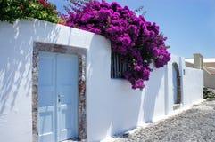 Santorini Blumen Lizenzfreie Stockfotos
