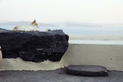 Relaxing cat at Oia, Santorini royalty free stock images