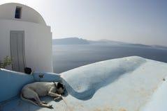 Santorini di sonno del cane Fotografia Stock Libera da Diritti