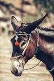 Santorini donkey Stock Image