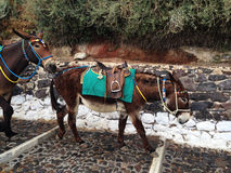 Santorini donkey going down in Greece Stock Photo