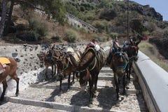Santorini donkey path Stock Image