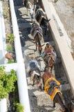Santorini Donkey Ride Royalty Free Stock Photography