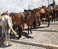 Santorini Donkeys Royalty Free Stock Photos