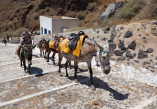 Santorini Donkeys Stock Images