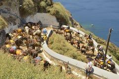 Santorini donkeys Royalty Free Stock Photo