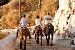 Santorini Donkeys Greece Stock Images