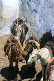 Santorini - Donkeys resting Stock Image