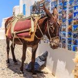 Santorini-Esel Lizenzfreie Stockfotos