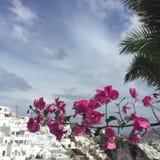 Santorini fleurit l'île romantique Grèce Images libres de droits