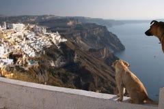 Santorini, Grecia, cani in Thira Fotografia Stock