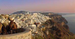 Santorini, Grecja - Grecki osioł zdjęcie royalty free