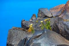 Santorini volcanic stone rock and caldera, Greece. Santorini, Greece panorama with big volcanic stone rock and caldera, sea, flowers background stock photo