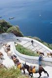 Santorini, Griekenland, April 2019 Paarden en ezels op het Eiland Santorini - het traditionele vervoer voor toeristen Dieren  royalty-vrije stock afbeeldingen