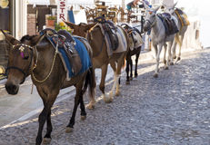 Santorini horses Stock Photography