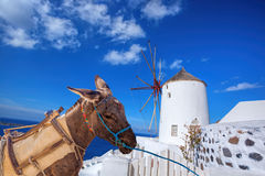Santorini island with donkey in Oia village, Greece Royalty Free Stock Photo