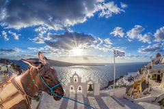 Santorini island with donkey in Oia village, Greece Royalty Free Stock Photos