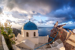 Santorini island with donkey in Oia village, Greece Stock Image