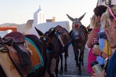 Donkeys in Oia, Santorini Island. stock photos