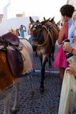 Donkeys in Oia, Santorini Island. stock photo