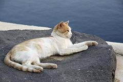 Santorini-Katze unter der Sonne lizenzfreies stockfoto