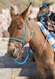 Santorini - l'âne dans le port d'Amoudi Photo libre de droits