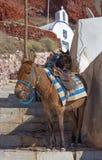 Santorini - l'âne dans le port d'Amoudi Image libre de droits