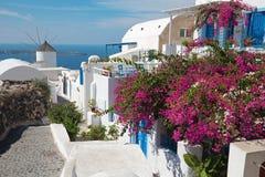 Santorini - liten blomma decored gång i del av Oia med väderkvarnarna Royaltyfri Bild