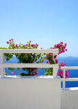 Santorini terrace with flowers Stock Photo
