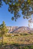 Santorini vineyard Stock Images