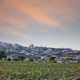 Santorini vineyard landscape Stock Photos