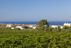Santorini vineyard landscape Stock Images