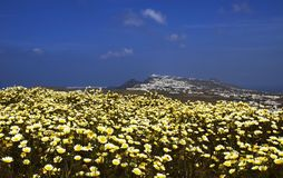 santorini wiosna Fotografia Stock