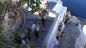 Santorini wysp Greccy osły iść w dół kroki zbiory