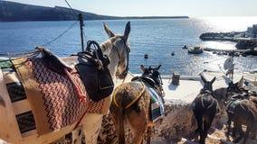 Santorinihaven in Medio Dag op een Ezel wordt gevangen die stock fotografie